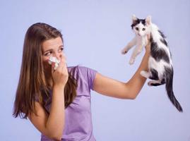 Как бороться с аллергией на кошек?